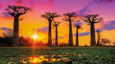Adventure in the magical island of Lemurs and Baobabs